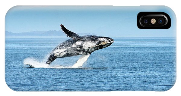 Breaching Humpback Whales Happy-4 IPhone Case