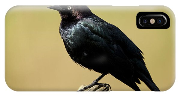 Brewers Blackbird Resting On Log IPhone Case