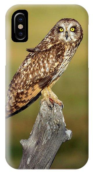 Bright-eyed Owl IPhone Case