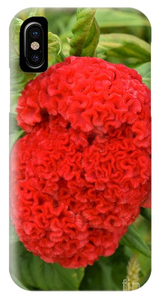 Bright Red Cockscomb IPhone Case