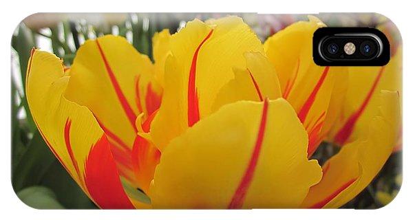 Bright Tulip IPhone Case