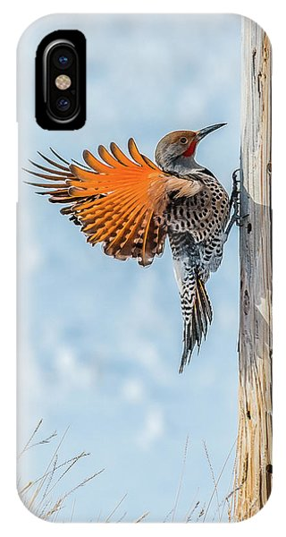 Brilliant Northern Flicker Woodpecker IPhone Case