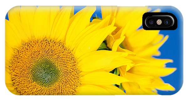 Brilliant Sunflowers IPhone Case
