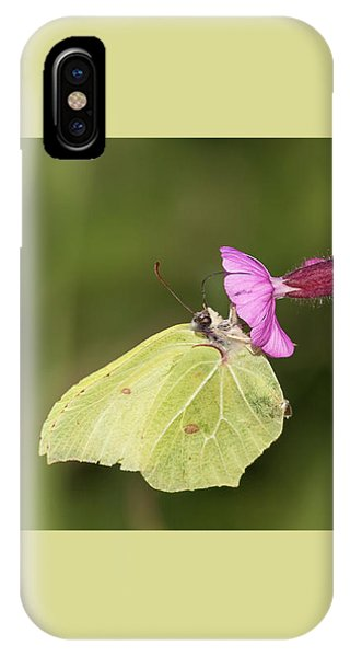Brimstone Butterfly IPhone Case