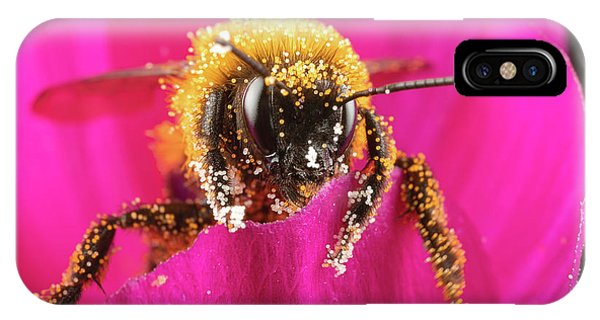 IPhone Case featuring the photograph Bro Got Any Pollen by Brian Hale