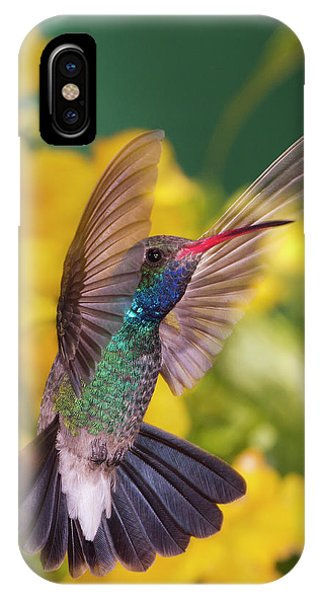 Humming Bird iPhone Case - Broad-bill Pose by Janet Fikar