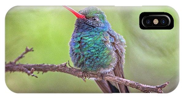 Broad-billed Hummingbird 3652 IPhone Case