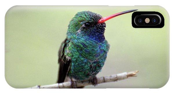 Broad-billed Hummingbird Portrait IPhone Case