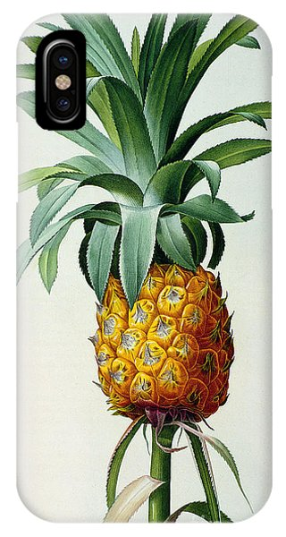 Organic iPhone Case - Bromelia Ananas, From 'les Bromeliacees' by Pierre Joseph Redoute