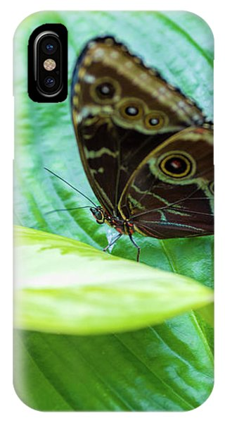 Brown And Blue Butterfly IPhone Case