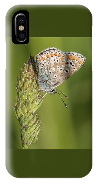 Brown Argus IPhone Case