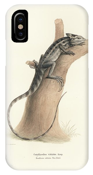 IPhone Case featuring the drawing Brown Basilisk, Basiliscus Vittatus by Friedrich August Schmidt