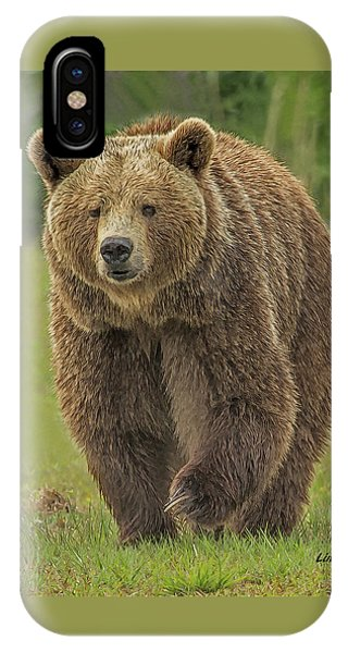 Brown Bear 1 IPhone Case