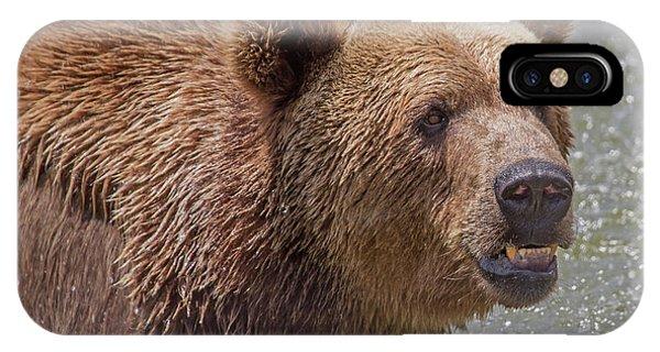 Brown Bear 10 IPhone Case