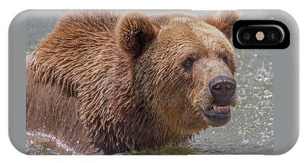 Brown Bear 10 IPhone Case