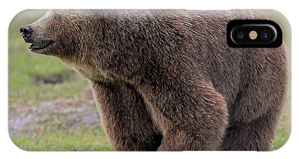 Brown Bear 14.5 IPhone Case