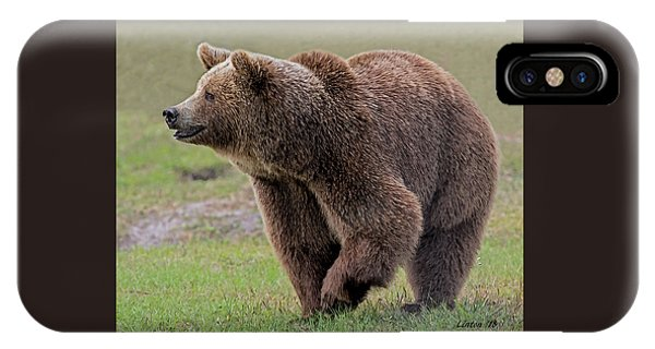Brown Bear 14.5 IPhone Case