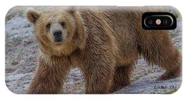 Brown Bear 3 IPhone Case