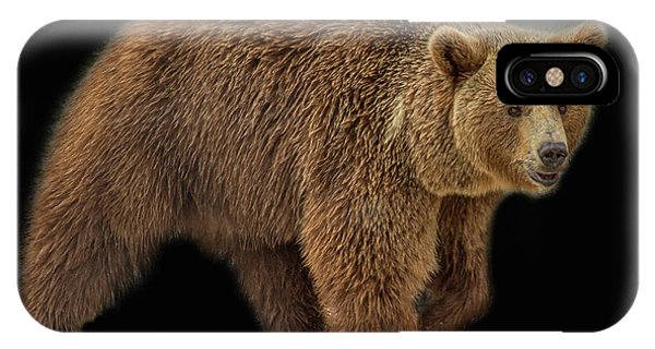 Brown Bear 5 IPhone Case