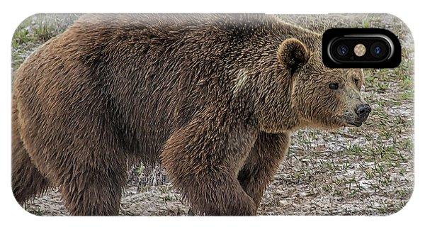 Brown Bear 6 IPhone Case