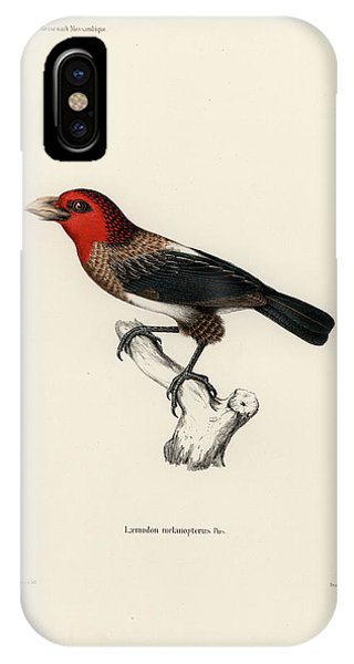 IPhone Case featuring the drawing Brown-breasted Barbet, Pogonornis Melanopterus by Breck Bartholomew