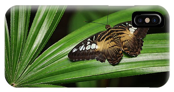 Brown Clipper Butterfly -parthenos Sylvia- On Frond IPhone Case
