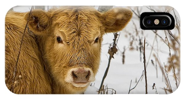 IPhone Case featuring the photograph Brown Cow by Ken Barrett