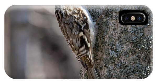 IPhone Case featuring the photograph Brown Creeper  by Ricky L Jones