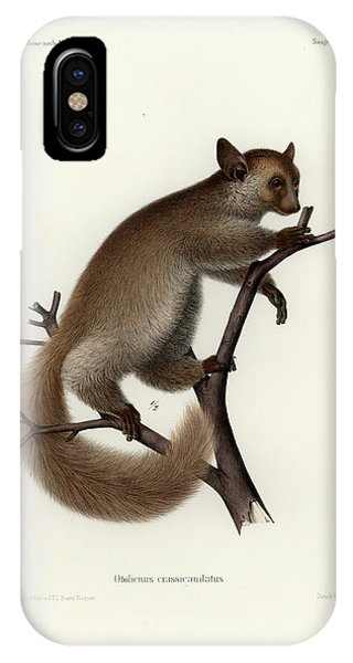 Brown Greater Galago Or Thick-tailed Bushbaby IPhone Case