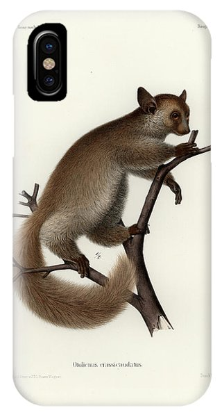 IPhone Case featuring the drawing Brown Greater Galago Or Thick-tailed Bushbaby by Hugo Troschel and J D L Franz Wagner