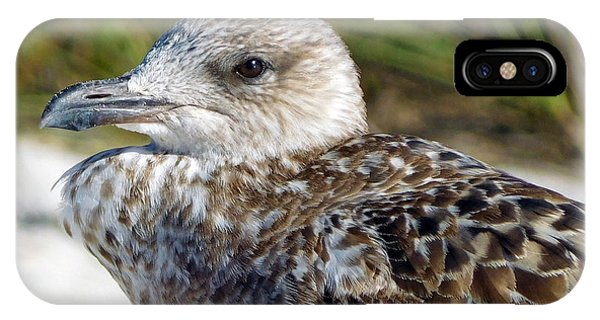 Brown Gull At Wiggins Pass IPhone Case
