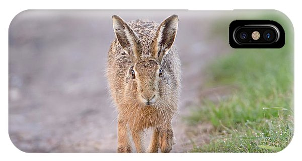 Brown Hare Approaching Down Track IPhone Case