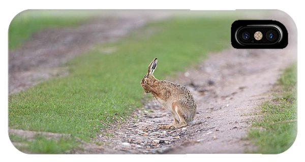 Brown Hare Cleaning IPhone Case
