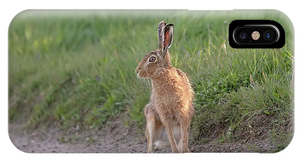 Brown Hare Listening IPhone Case