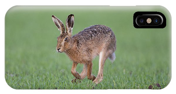 Brown Hare Running IPhone Case