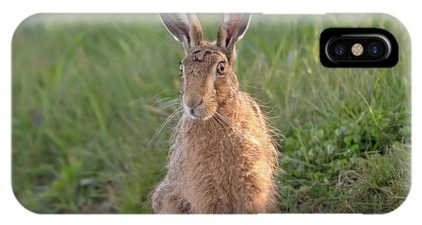 Brown Hare Sat On Track At Dawn IPhone Case