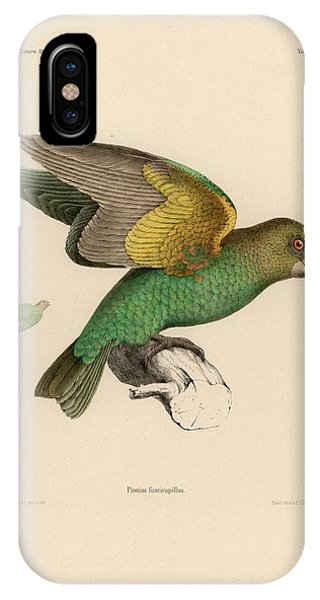 IPhone Case featuring the drawing Brown-headed Parrot, Piocephalus Cryptoxanthus by J D L Franz Wagner