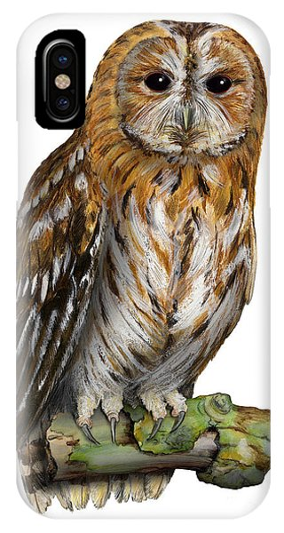Brown Owl Or Eurasian Tawny Owl  Strix Aluco - Chouette Hulotte - Carabo Comun -  Nationalpark Eifel IPhone Case