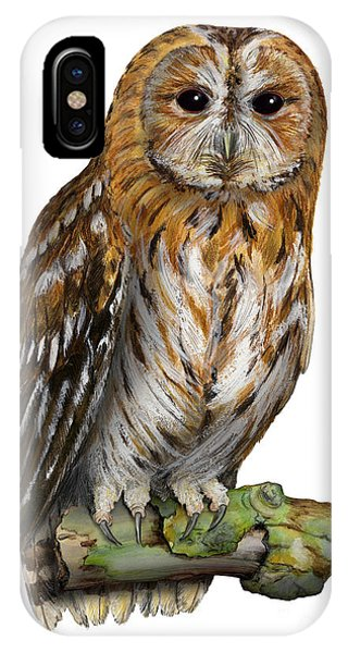 Brown Owl Or Eurasian Tawny Owl  Strix Aluco - Chouette Hulotte - Carabo Comun -  Nationalpark Eifel IPhone Case