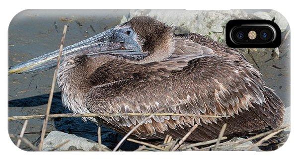 Brown Pelican 3 March 2018 IPhone Case