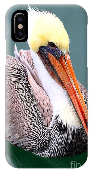 Half Moon Bay iPhone Case - Brown Pelican . 7d8291 by Wingsdomain Art and Photography