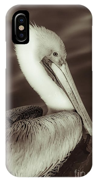 Avian iPhone Case - Brown Pelican Adult In Breeding Plumage, Close-up Of Head, Pelecanus Occidentalis, Usa by Stefano Senise