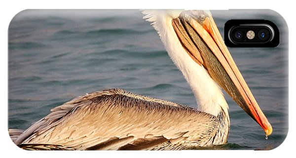 Brown Pelican Floating IPhone Case