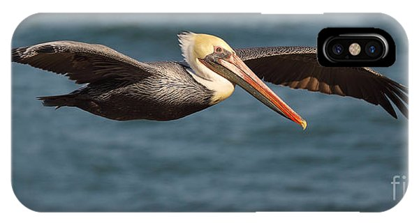 Brown Pelican Flying By IPhone Case