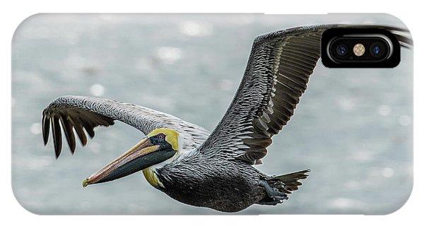 Brown Pelican In Flight IPhone Case