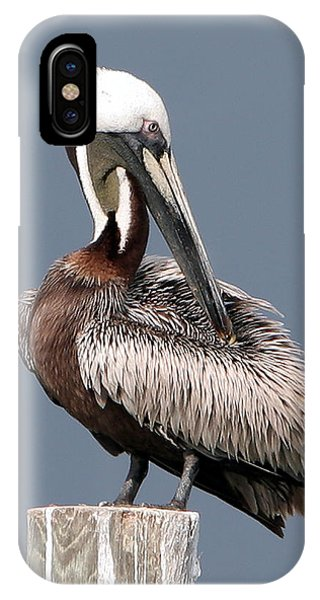 IPhone Case featuring the photograph Brown Pelican by Ken Barrett