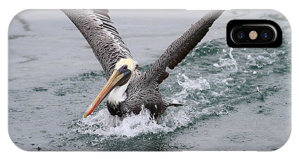 Brown Pelican Landing On Water . 7d8372 IPhone Case