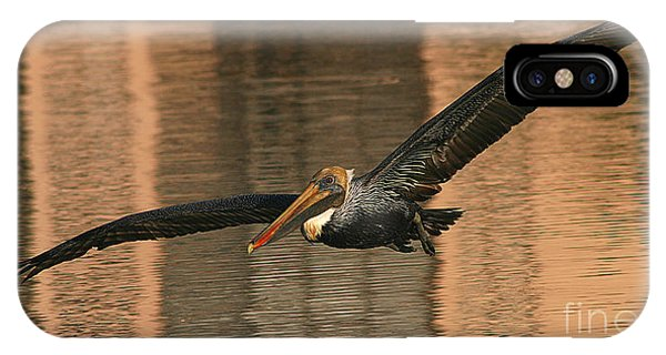 Brown Pelican On A Sunset Flyby IPhone Case