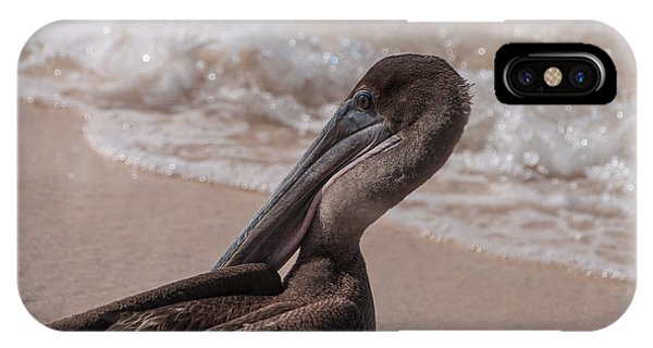 Brown Pelican On Las Bachas Beach Santa Cruz Indefatigable Island  Galapagos Islands IPhone Case
