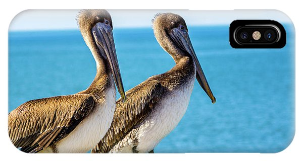 Brown Pelican Pair IPhone Case